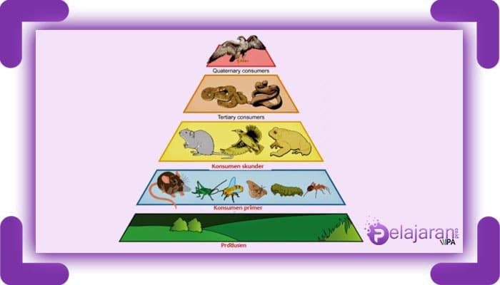 19++ Hewan herbivora dalam rantai makanan disebut terbaru