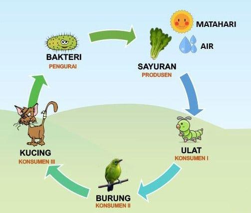 Rantai Makanan Ekosistem Kebun, Pengertian dan Contoh ...